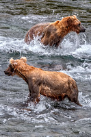 Staking Out the River, Katmai National